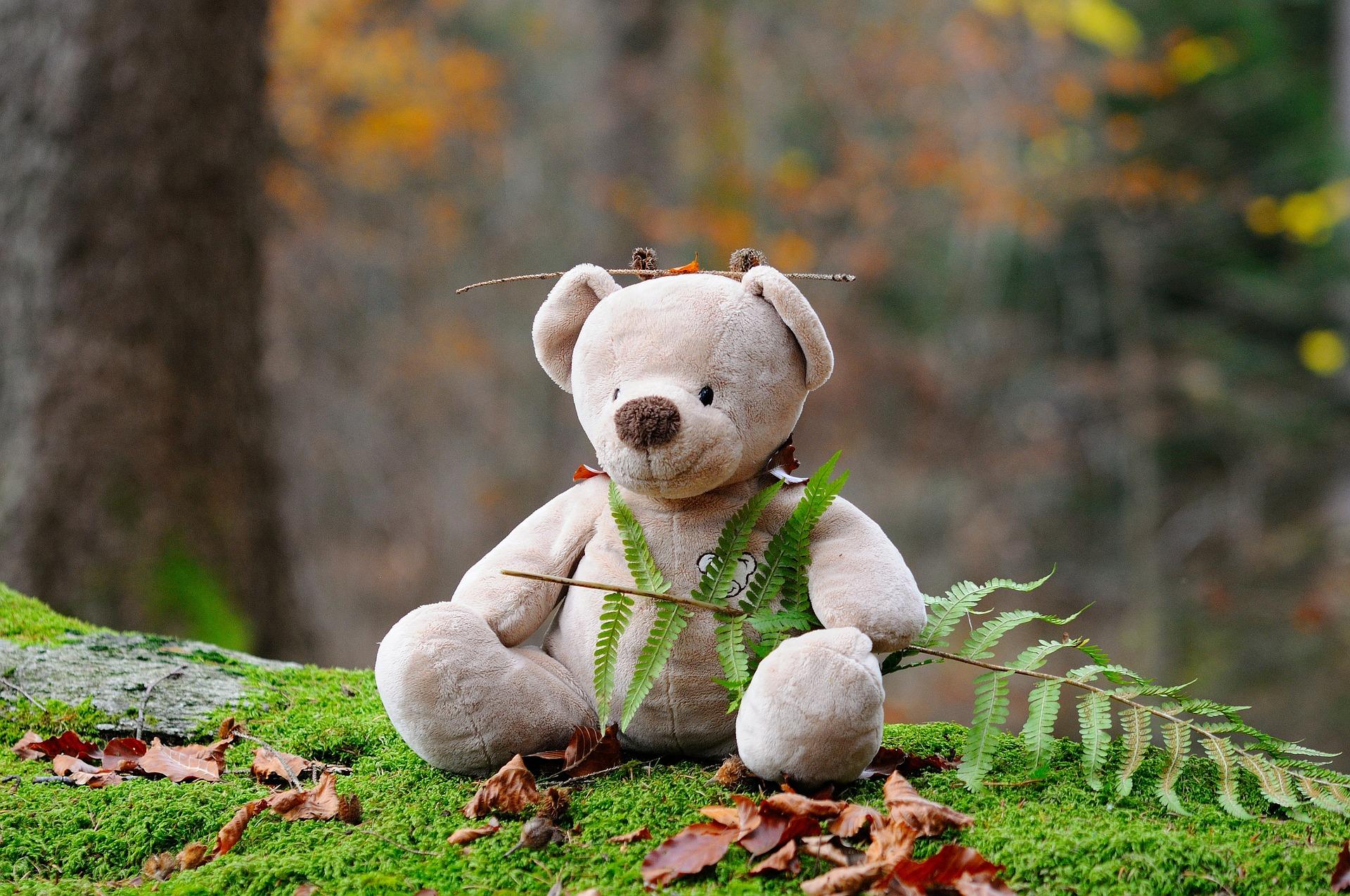 teddy-bear-524251_1920